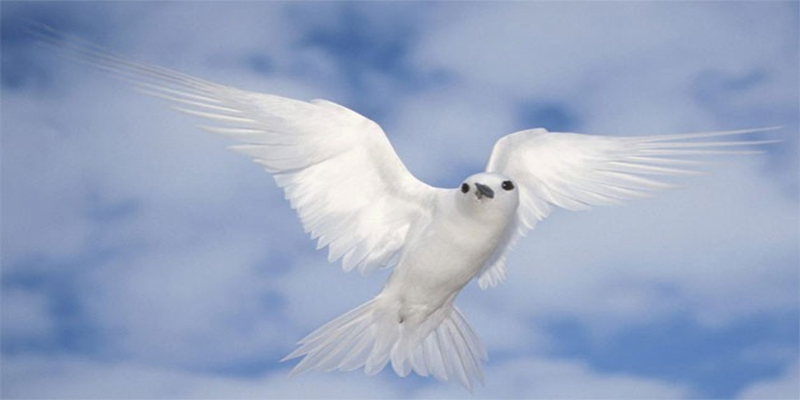holy spirit - the dove