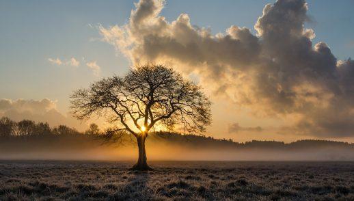 The Tree That Man Forgot